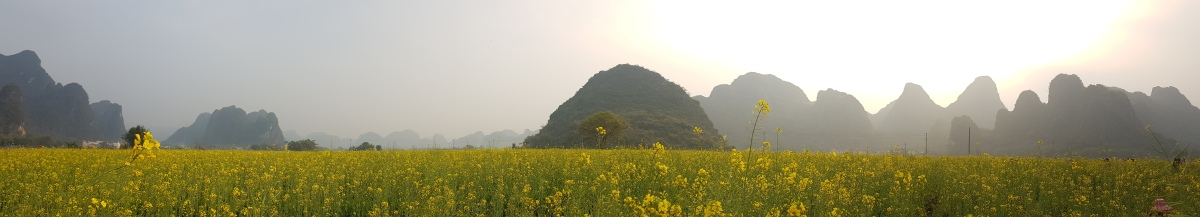 Yingde: The Cradle of Flowers